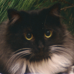 cat Phoebe